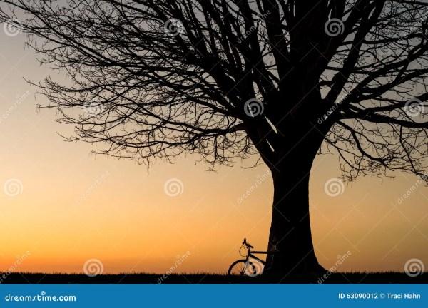 Tree Silhouette Sunset