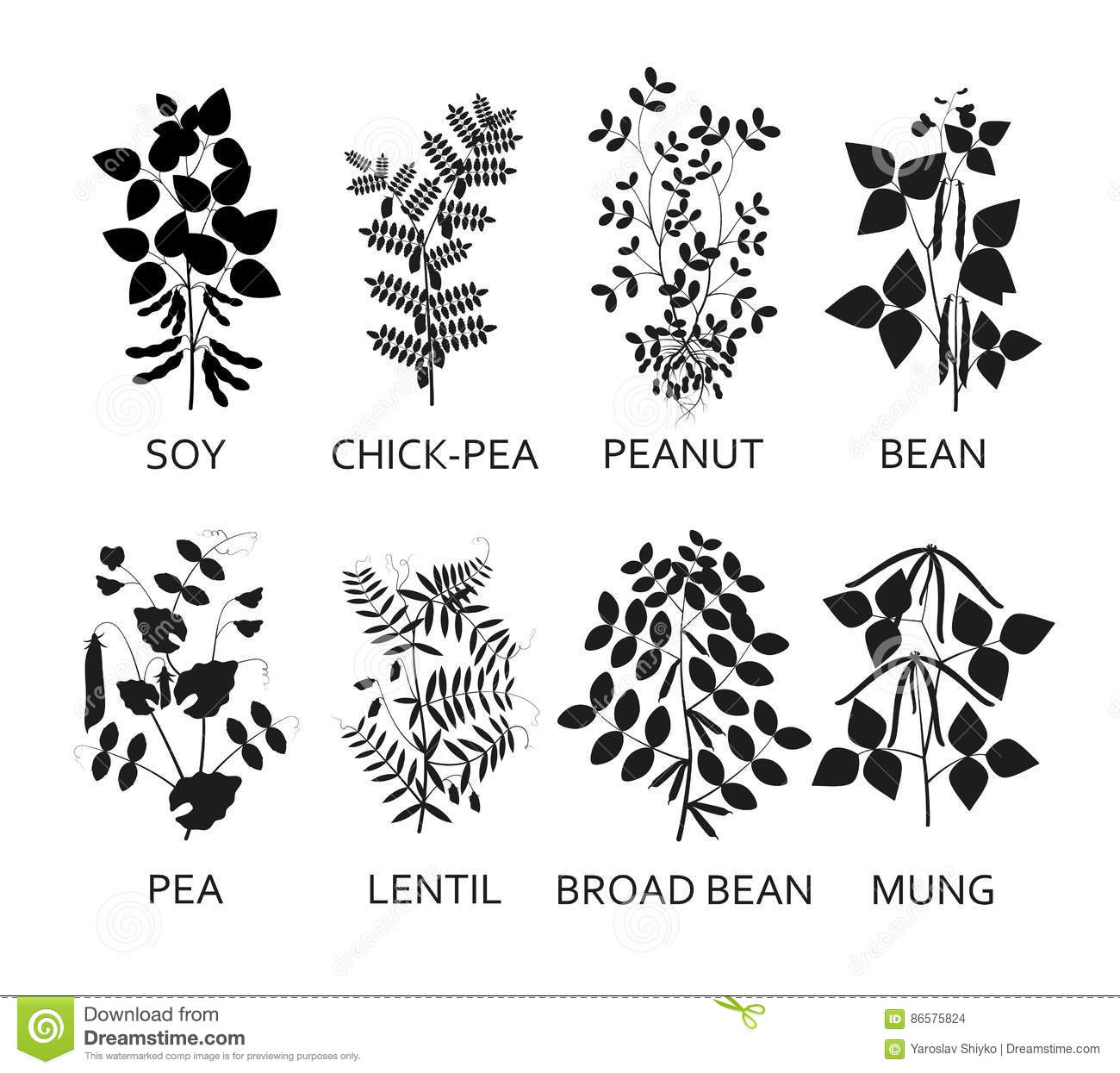 Silhouettes Of Legumes Plants With Leaves Pods And