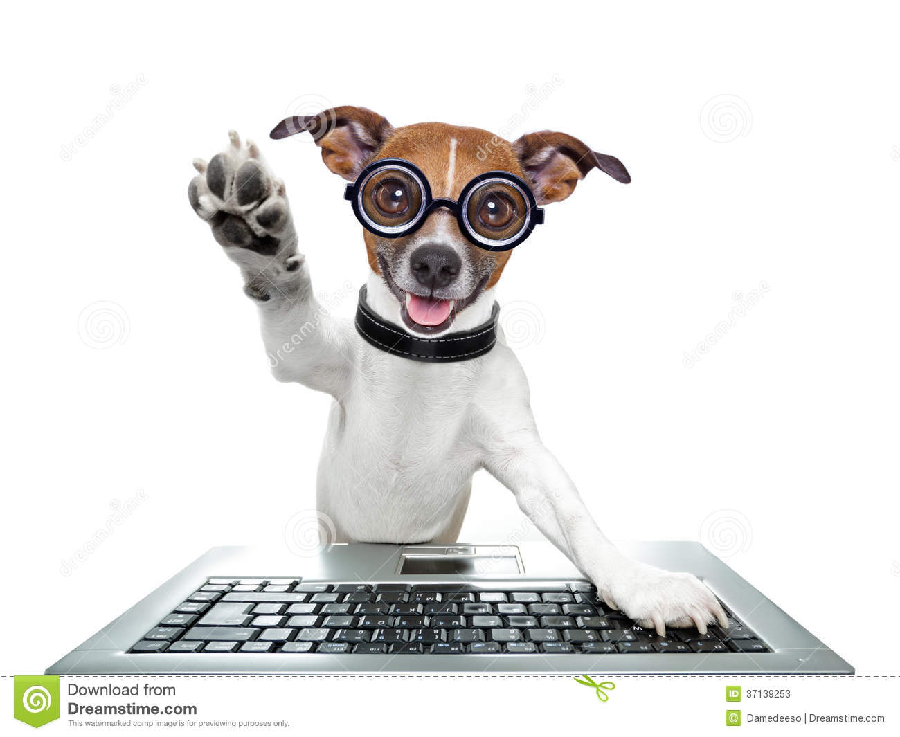 Computer Dog Stock Photos Download 2185 Images