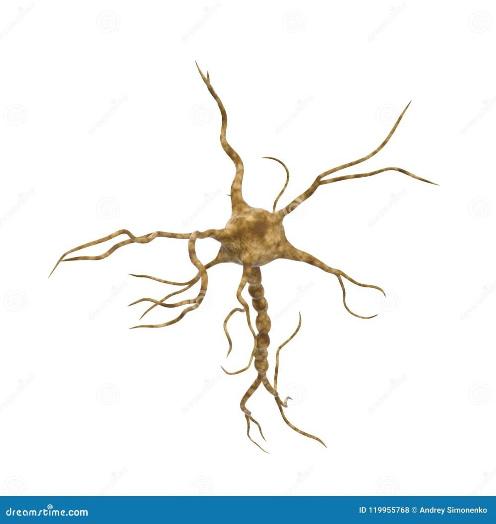 medium resolution of single neuron nervous system on white background 3d illustration