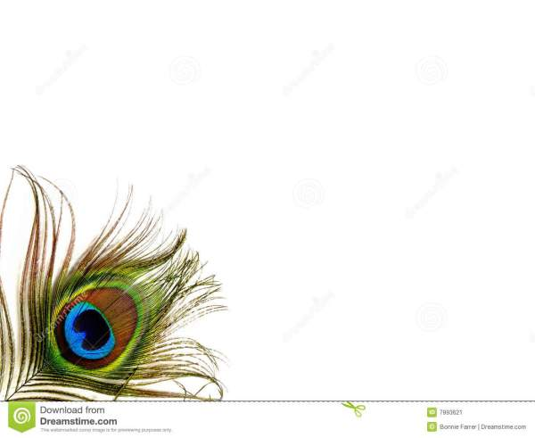 Single Peacock Feather - Isolated Stock Of Colorful Plumage 7993621