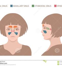 vector nose illustration sinus anatomy human respiratory system [ 1300 x 1008 Pixel ]