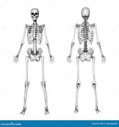 skeleton front back pencil drawing [ 1388 x 1300 Pixel ]
