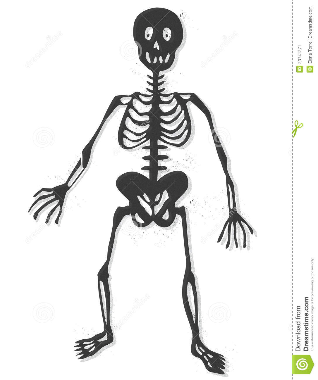 Skeleton vector stock vector. Image of chest, human