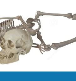 skeleton laying with skull [ 1300 x 639 Pixel ]