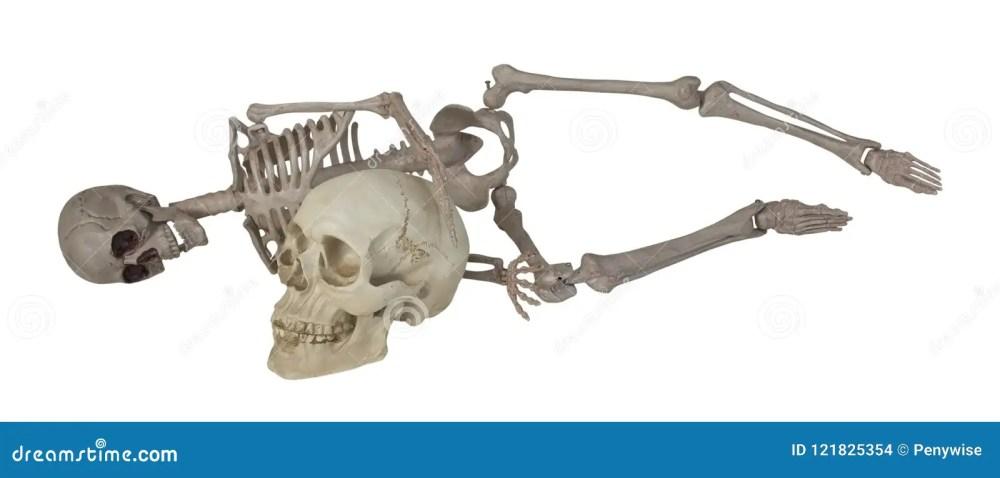 medium resolution of skeleton laying with skull