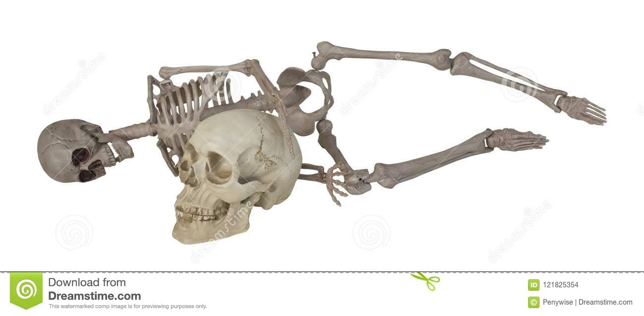 hight resolution of skeleton laying with skull
