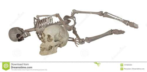 small resolution of skeleton laying with skull