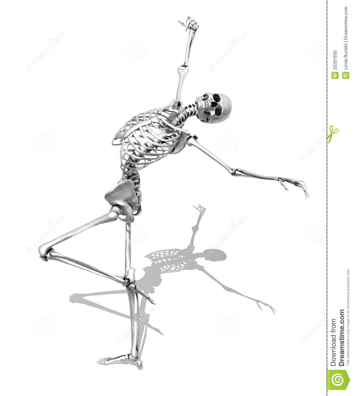 Skeleton In Skating Pose
