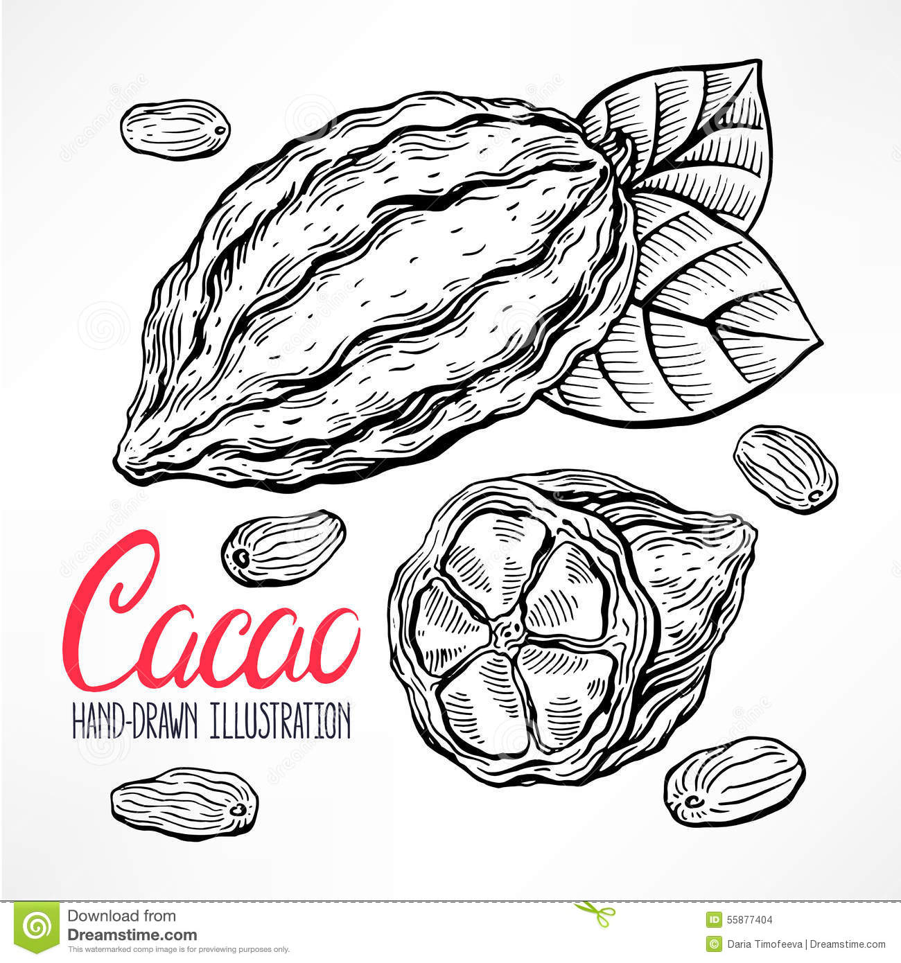 Sketch Cacao Beans Stock Vector