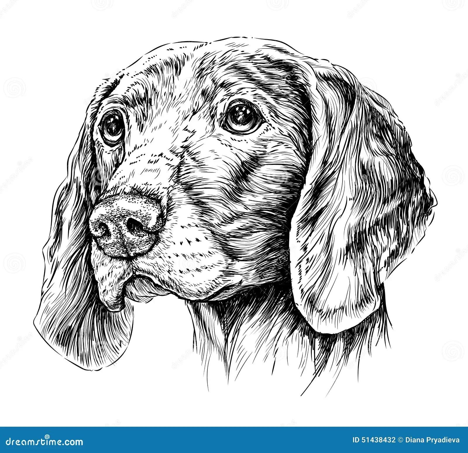 Sketch Of Dog Weimar Pointer Vector Illustration Stock Vector