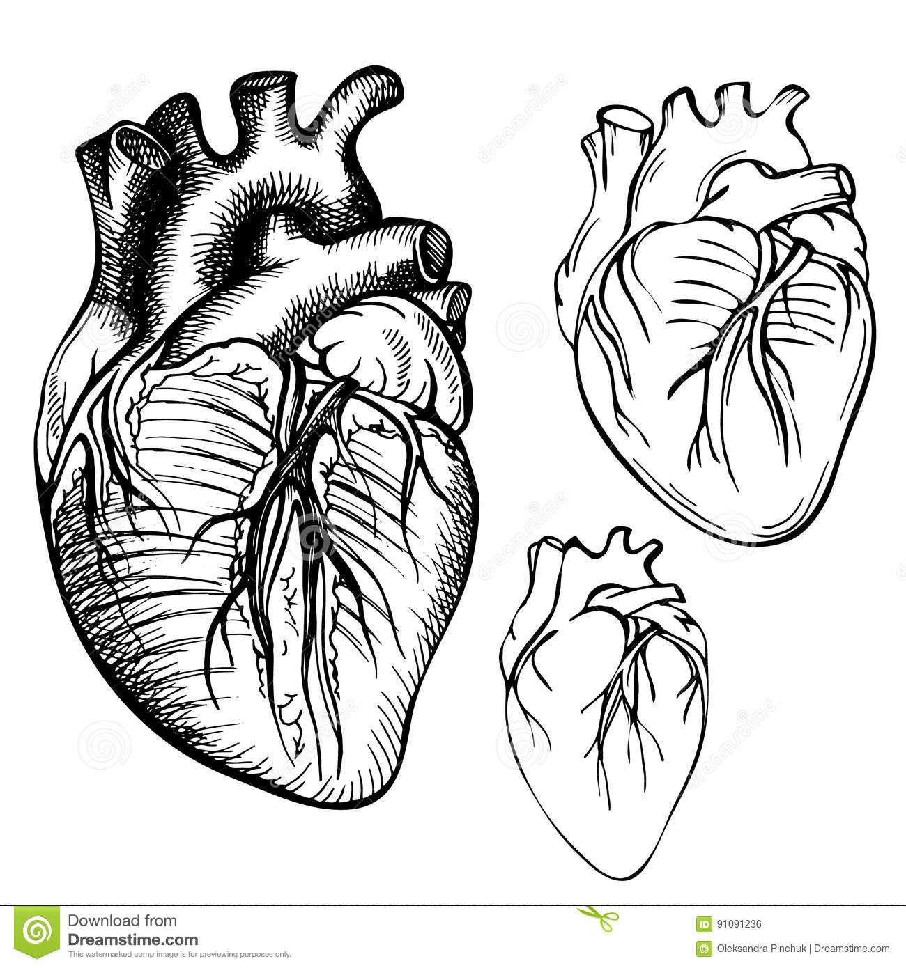 Sketch Ink Human Heart Engraved Anatomical Heart