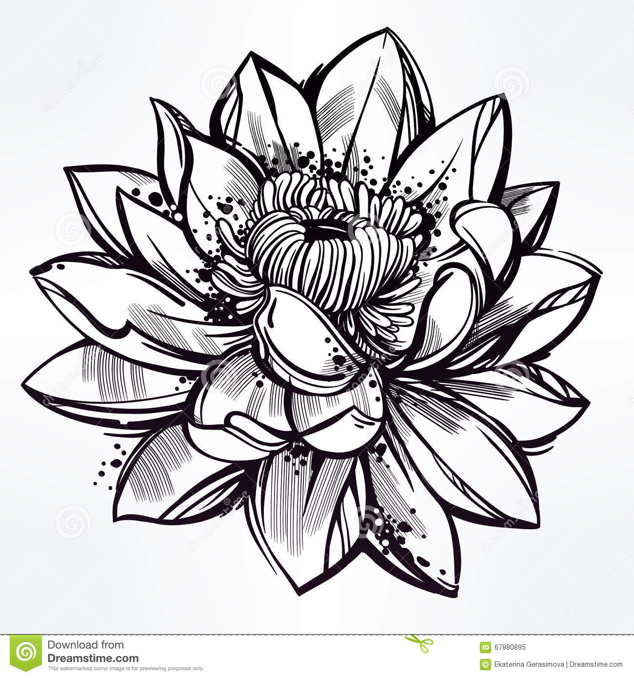 Sketch Of Lily Lotus Flower In Linear Style Stock Vector