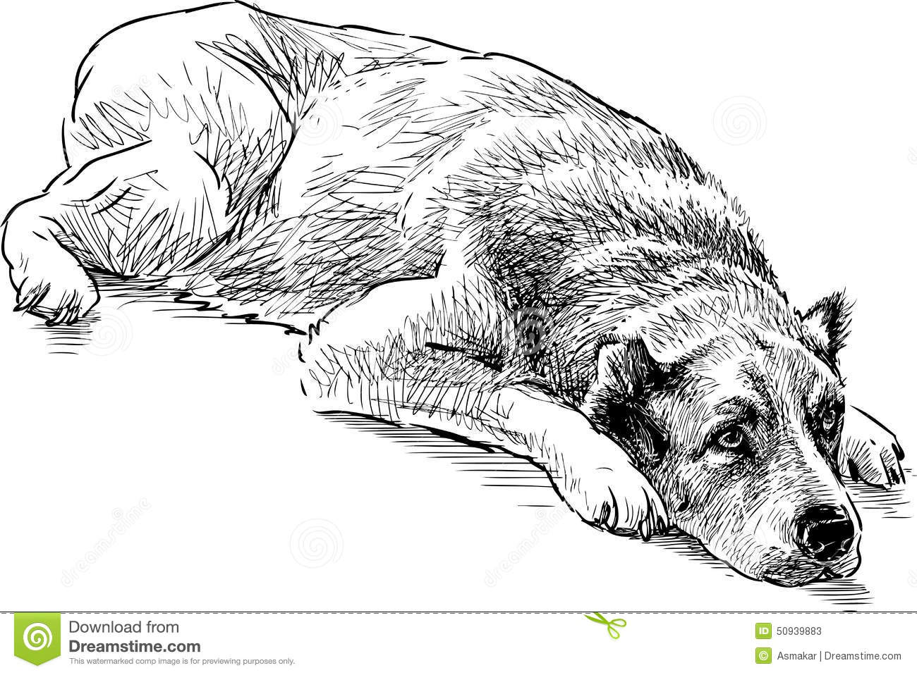 Sketch Of A Lying Dog Stock Vector Illustration Of Hand