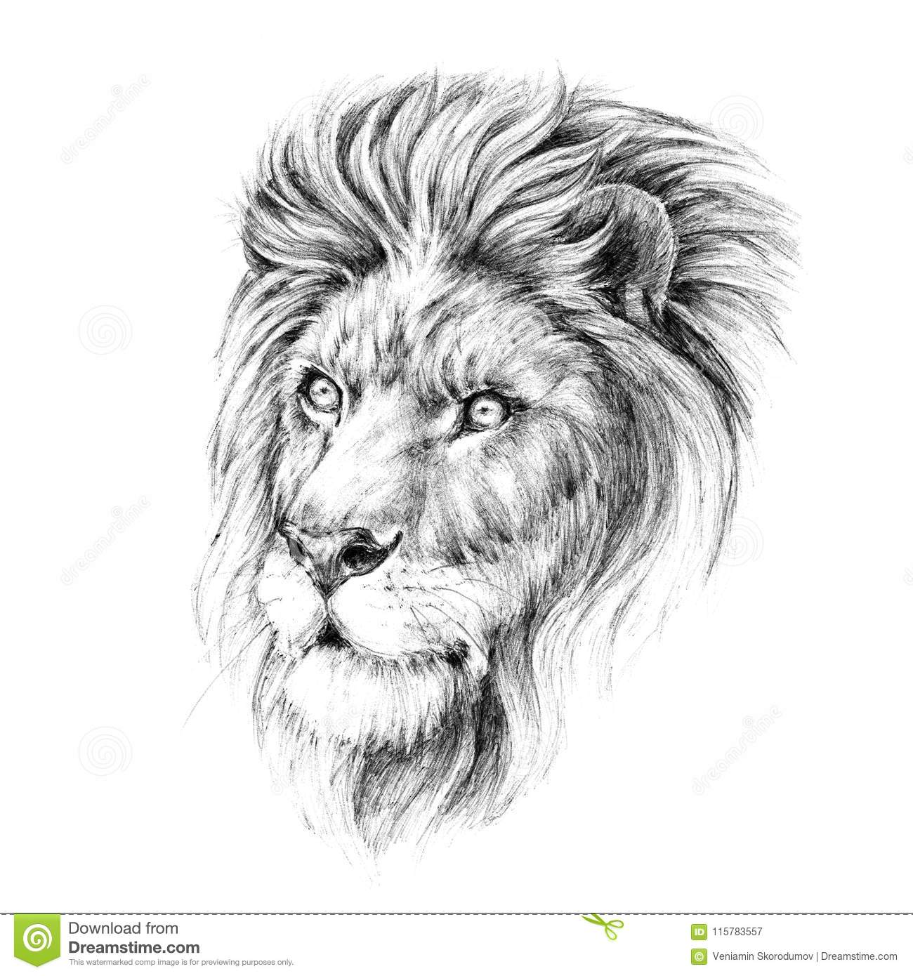 Sketch A Portrait Lion Head With A Mane Stock Illustration