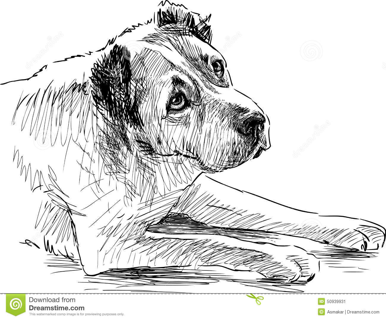 Sketch Of A Sad Dog Stock Vector Illustration Of Vector