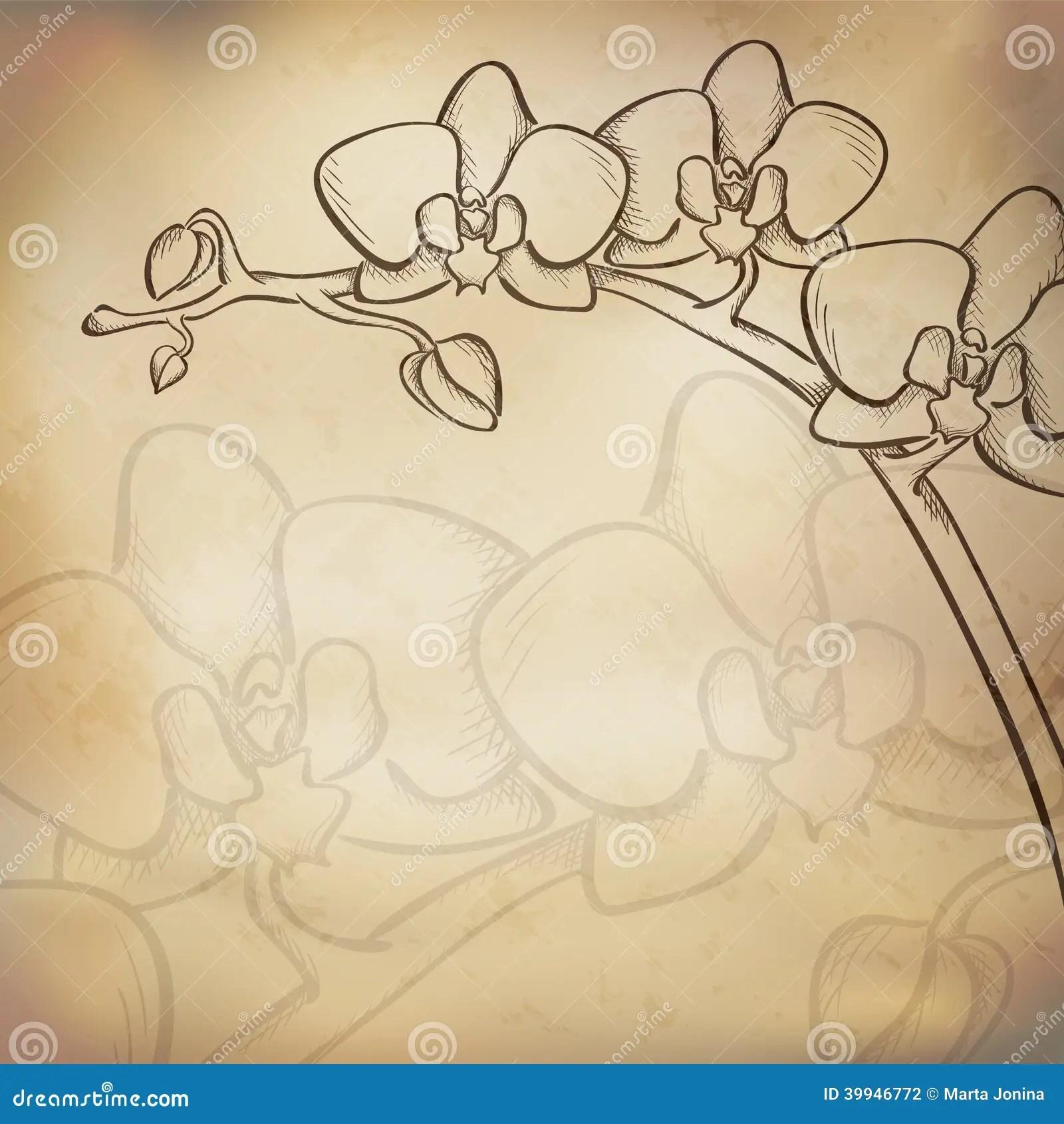 Orchidee Skizze