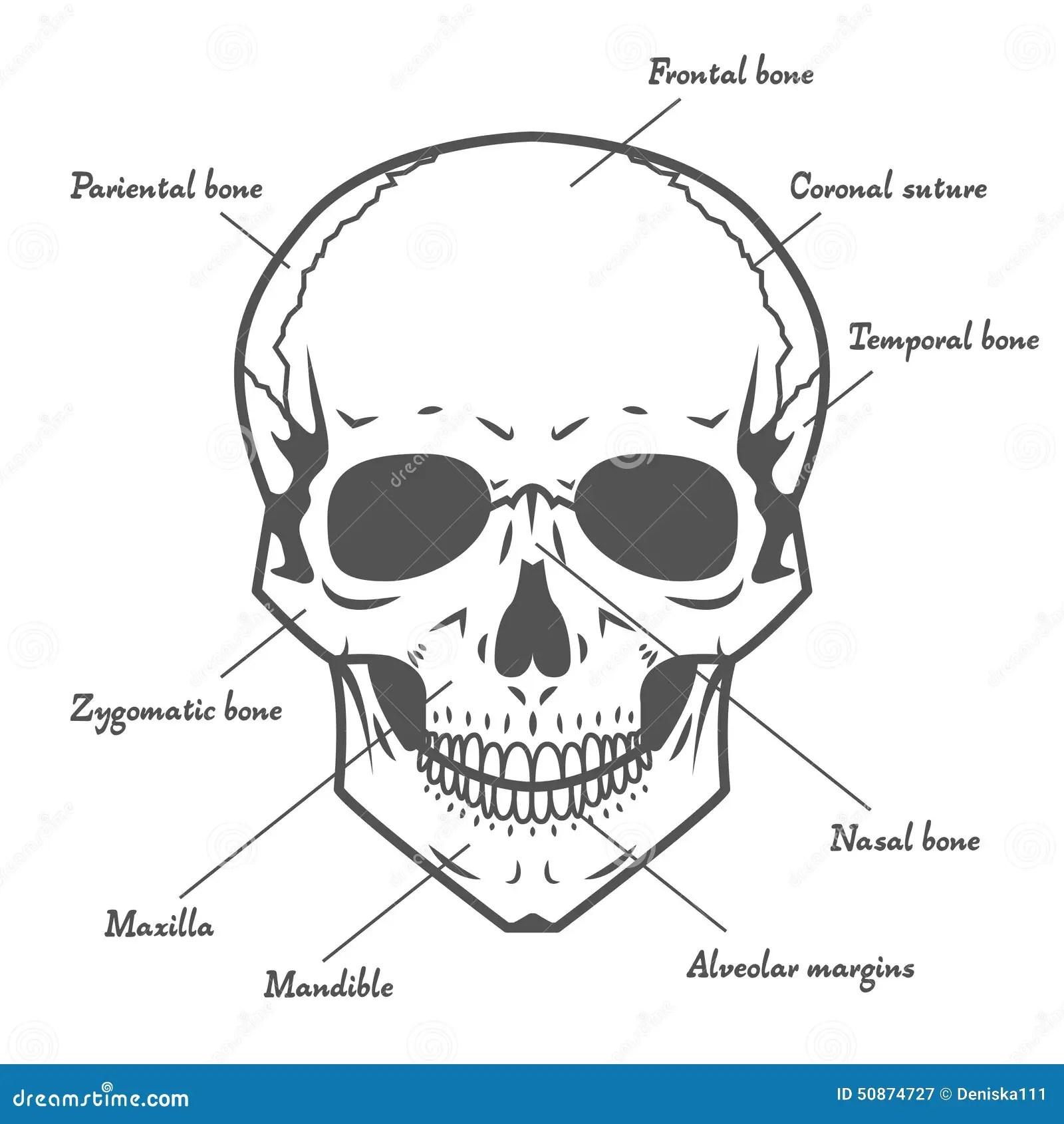 anatomy skull diagram top chevy silverado zubeh r in deutschland medical head engine and wiring