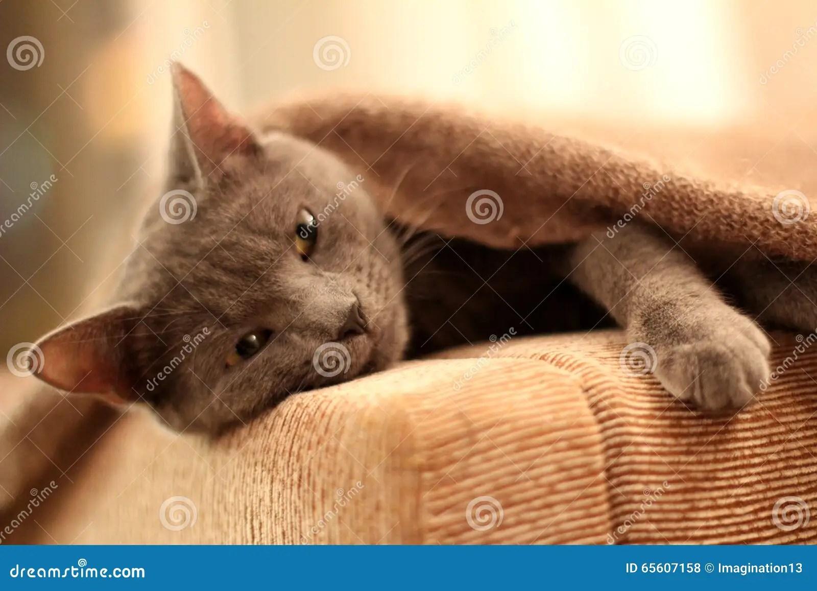 sleeper kitty stock photo