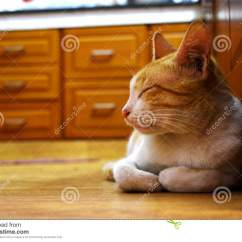 Cats In The Kitchen Summer Ideas Sleeping Cat Stock Image Of Yoga Moms 107561885 Pet Cute Brown Male
