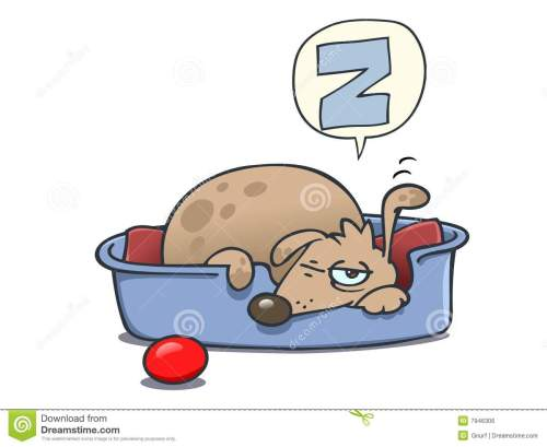 small resolution of a dog of mixed breed is curled up in its bed taking a nap snoring is about to wake up opening one eye and one ear is listening