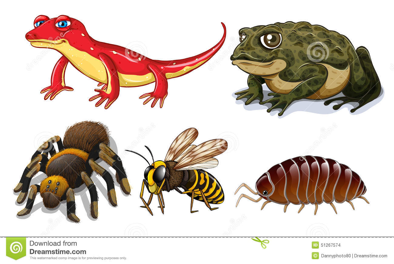 Small Animals Stock Vector Illustration Of Buzz