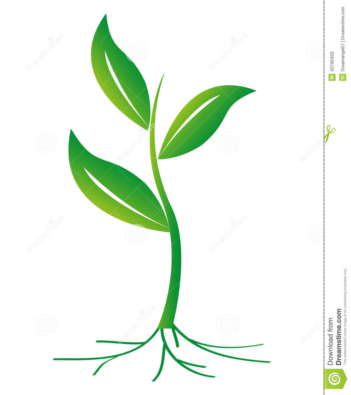 plant diagram clip art harley evo oil pump with roots vector wallpapers gallery