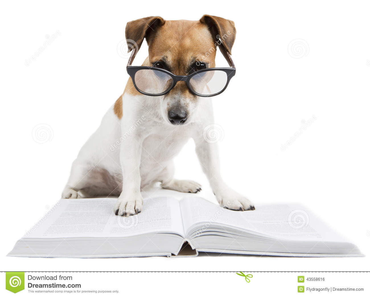 Smart Dog Reading Book Stock Photo Image Of Library