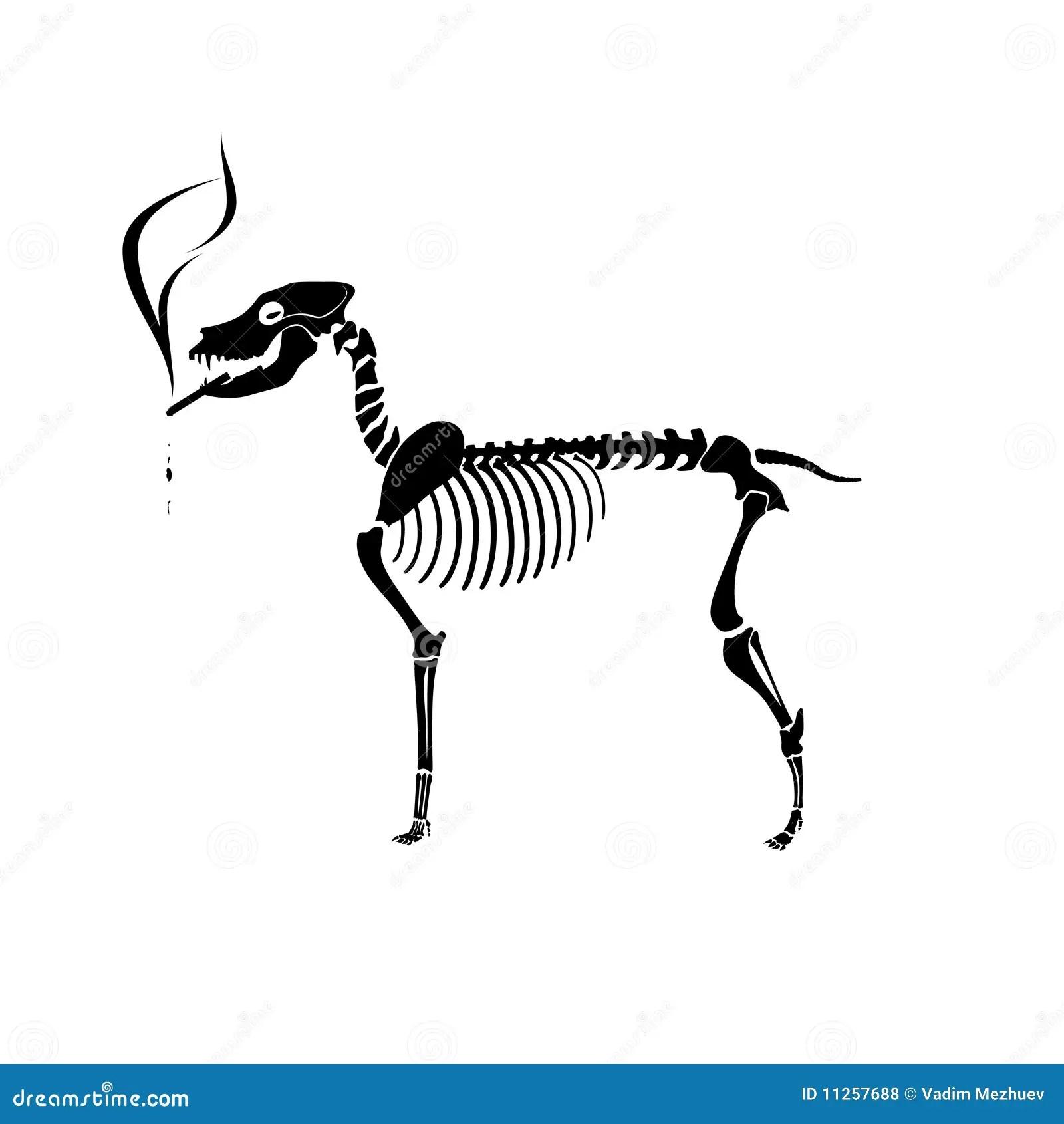 Smoking Dog Skeleton Stock Vector Illustration Of Graphic