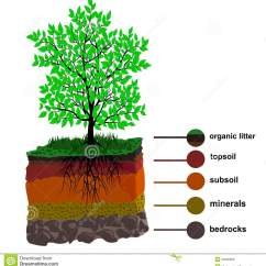 Soil Layers Diagram Human Eye Blind Spot Layer And Tree Stock Vector Illustration Of