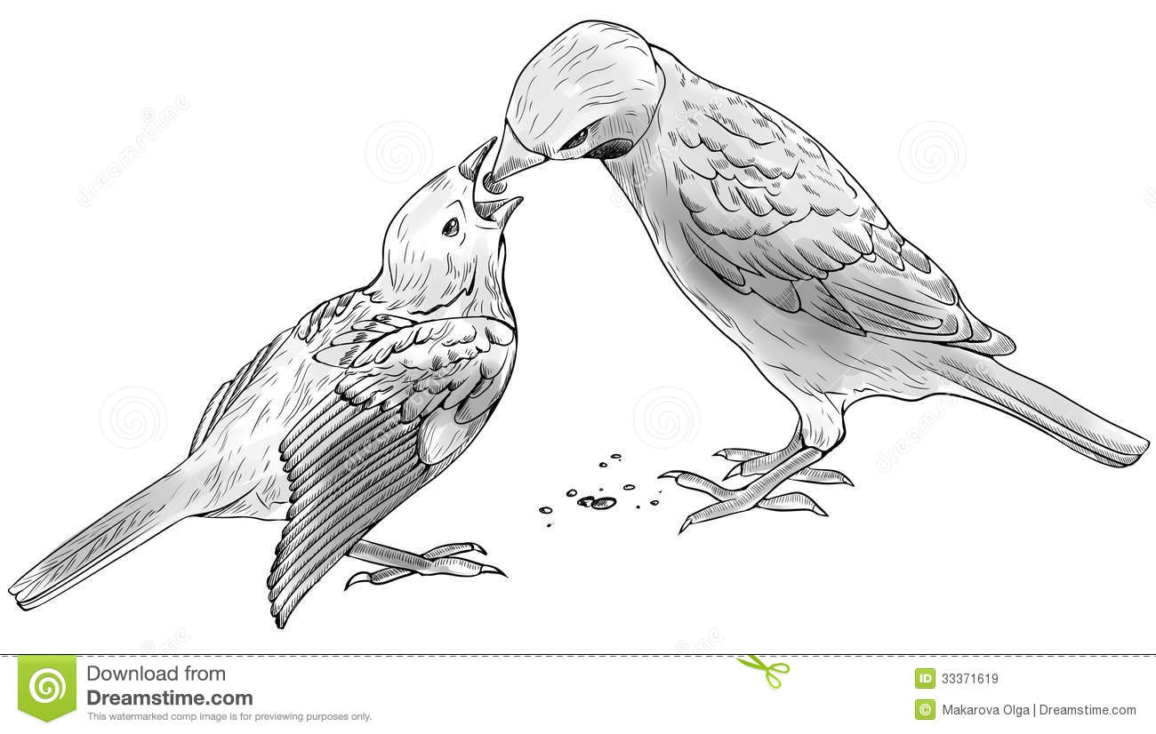Sparrow Feeds Baby Bird Stock Illustration Illustration