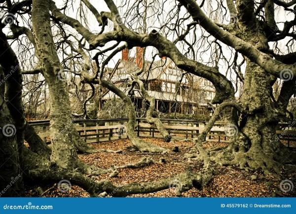 Spooky Trees Stock - 45579162