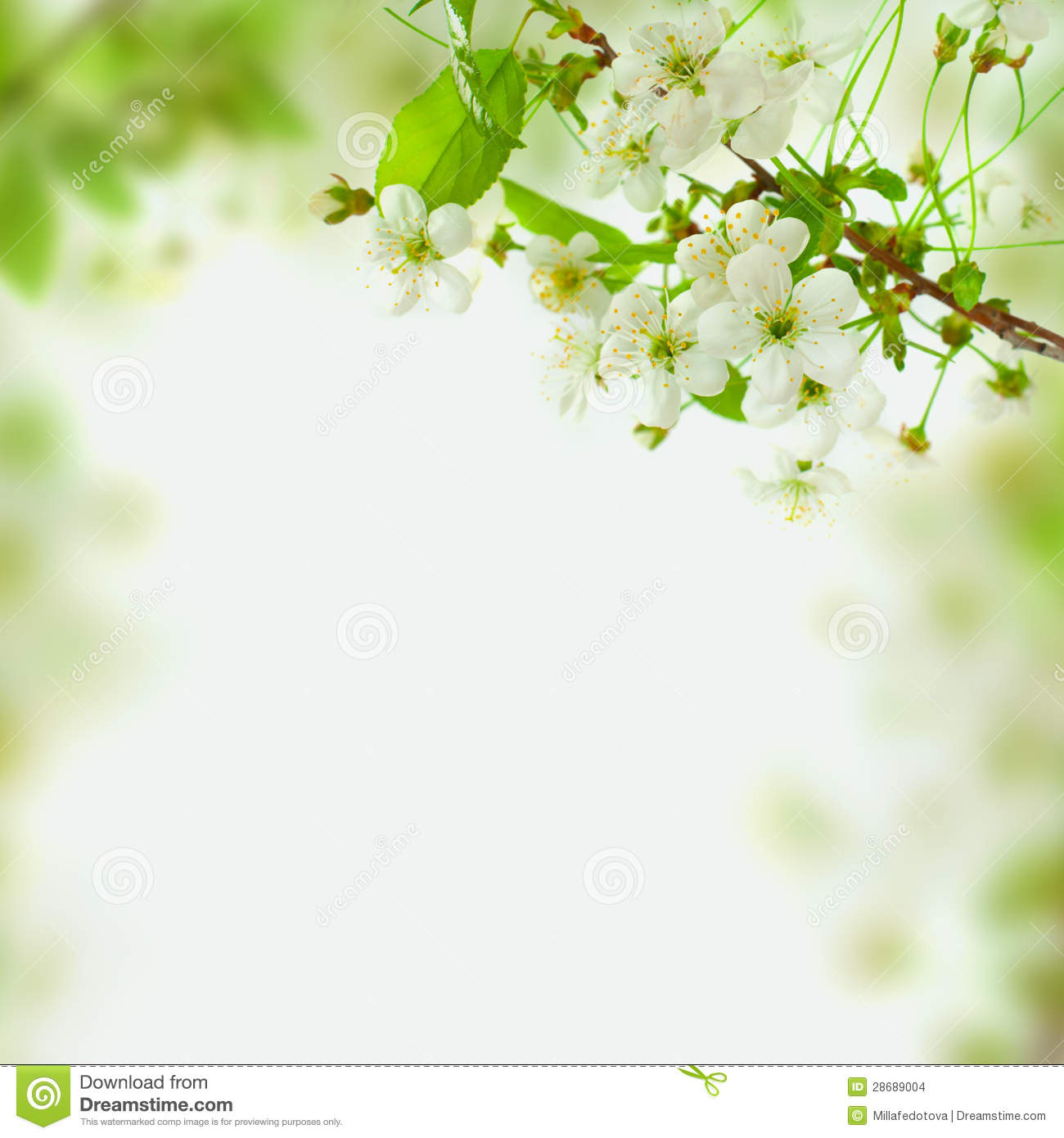 Falling Cherry Blossom Wallpaper Hd Spring Blossom Background Green Leaves And White Flowers