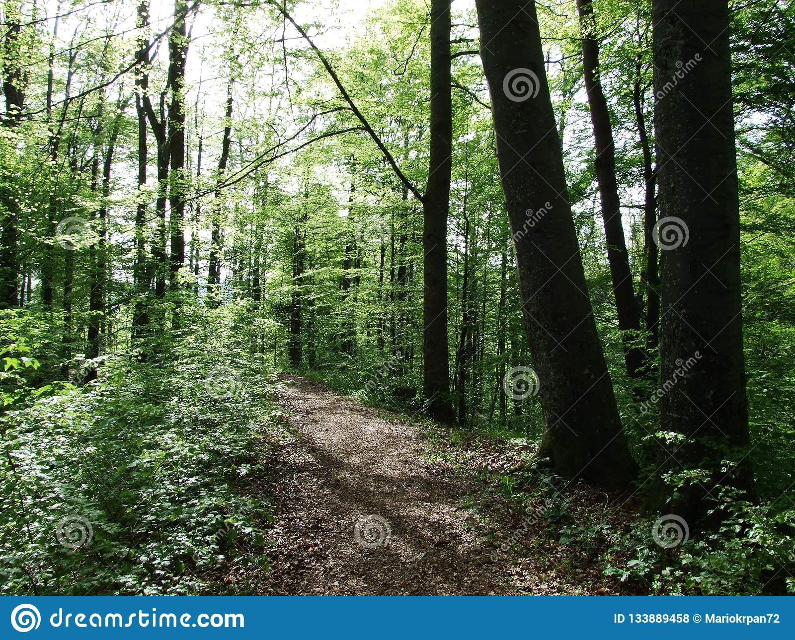 These forests are found in. Spring Deciduous Forest Near City Of Herisau Canton Appenzell Ausserrhoden Switzerland Stock Photo Image Of Appenzell City 133889458