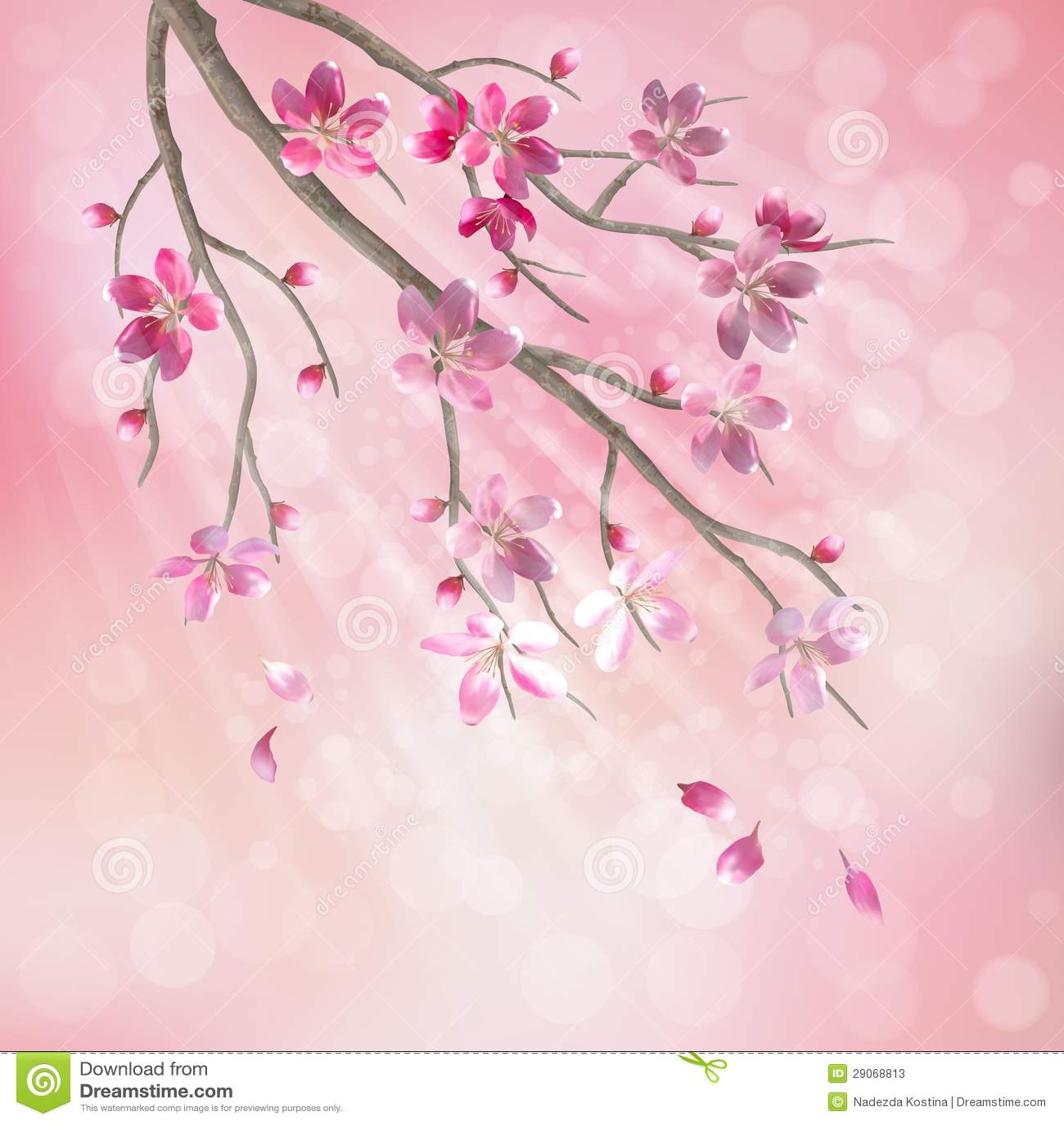 Falling Cherry Blossom Wallpaper Hd Spring Vector Tree Branch Cherry Blossom Flowers Stock