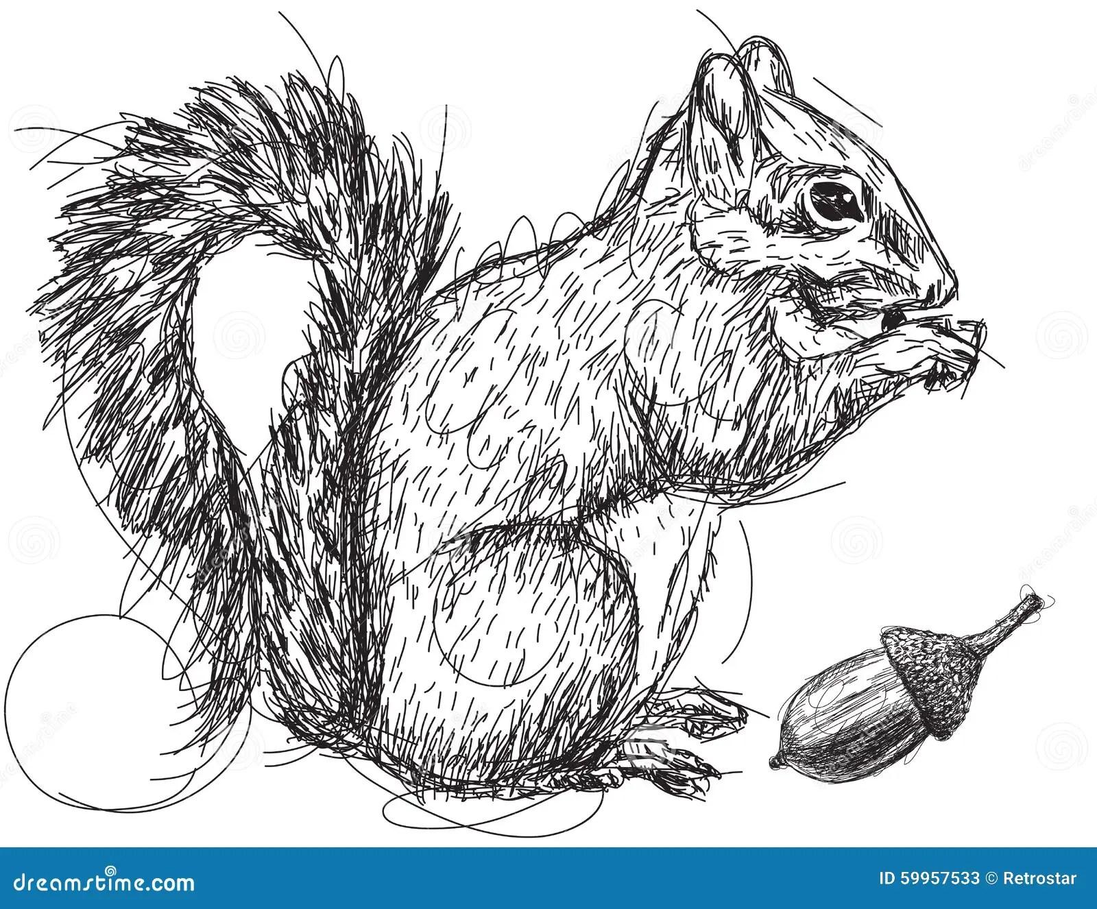Squirrel Nut Sketch Stock Vector Illustration Of Doodle