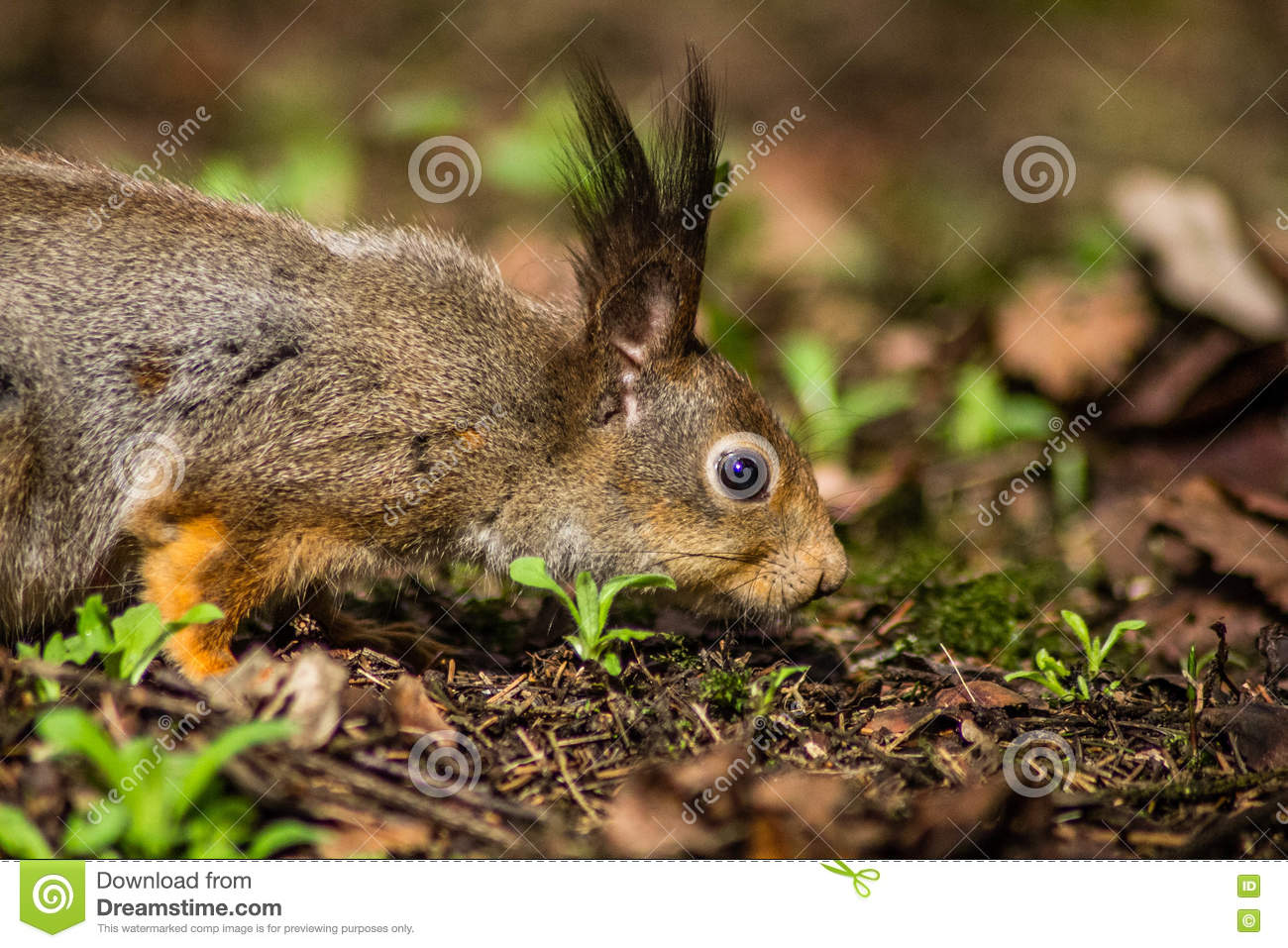 squirrel stock image image