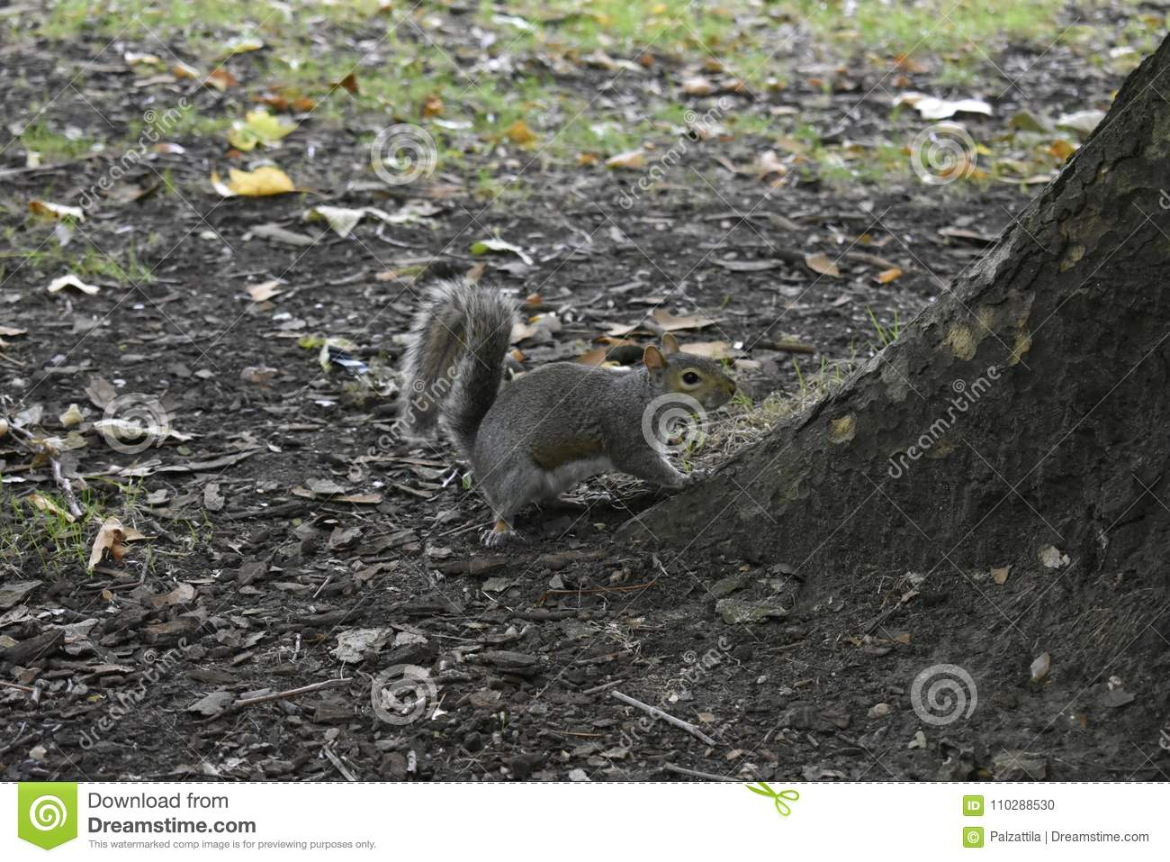 squirrel sciuridae nature stock