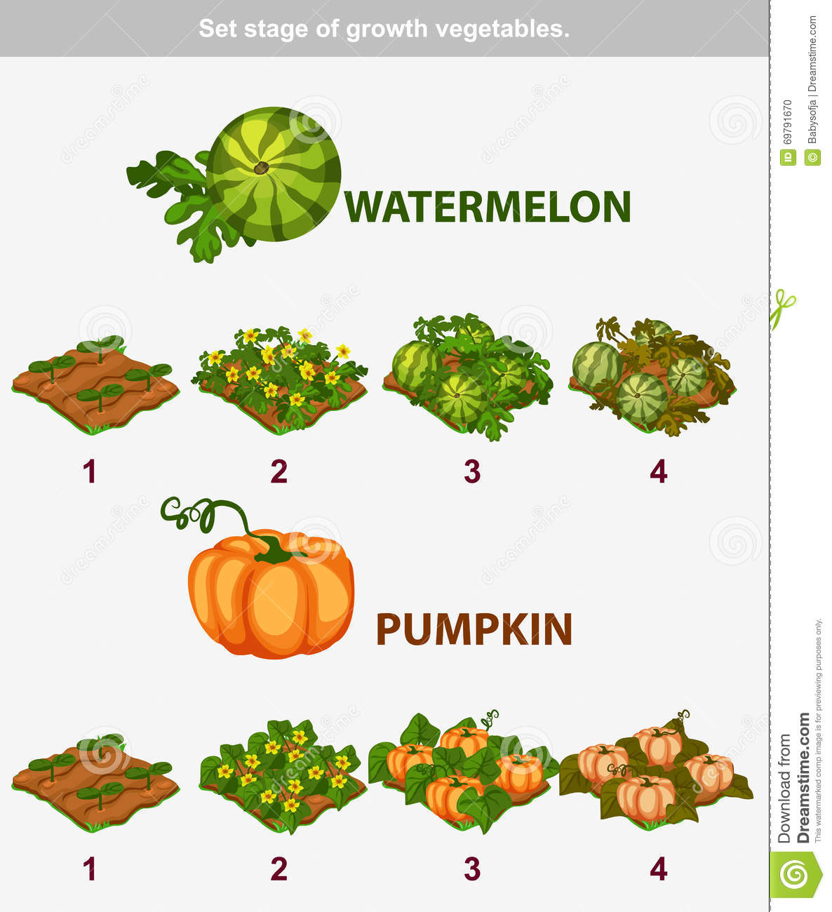 Stage Of Growth Vegetables Watermelon And Pumpkin Stock