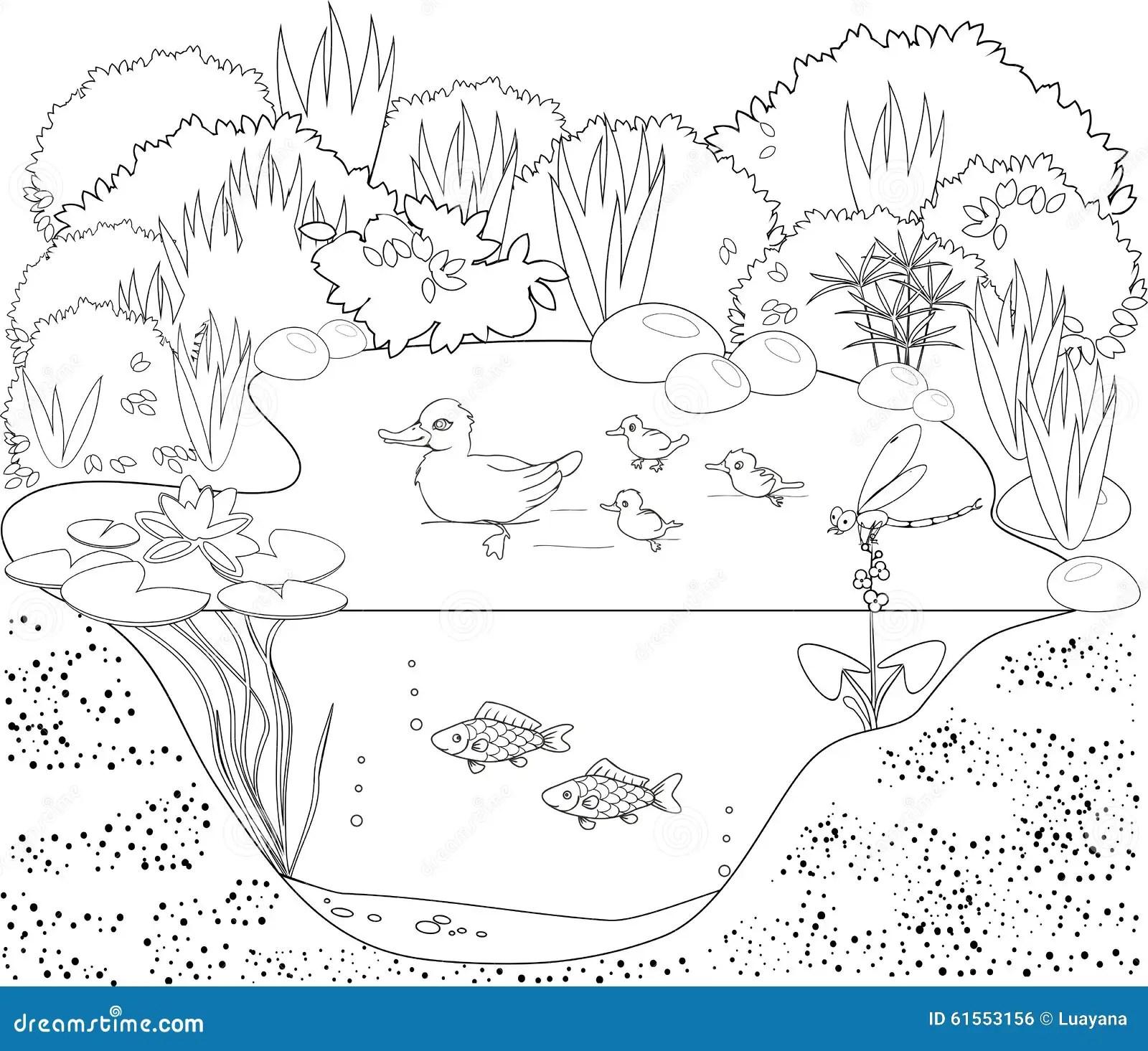Stagno Dell Anatra Di Coloritura Illustrazione Vettoriale