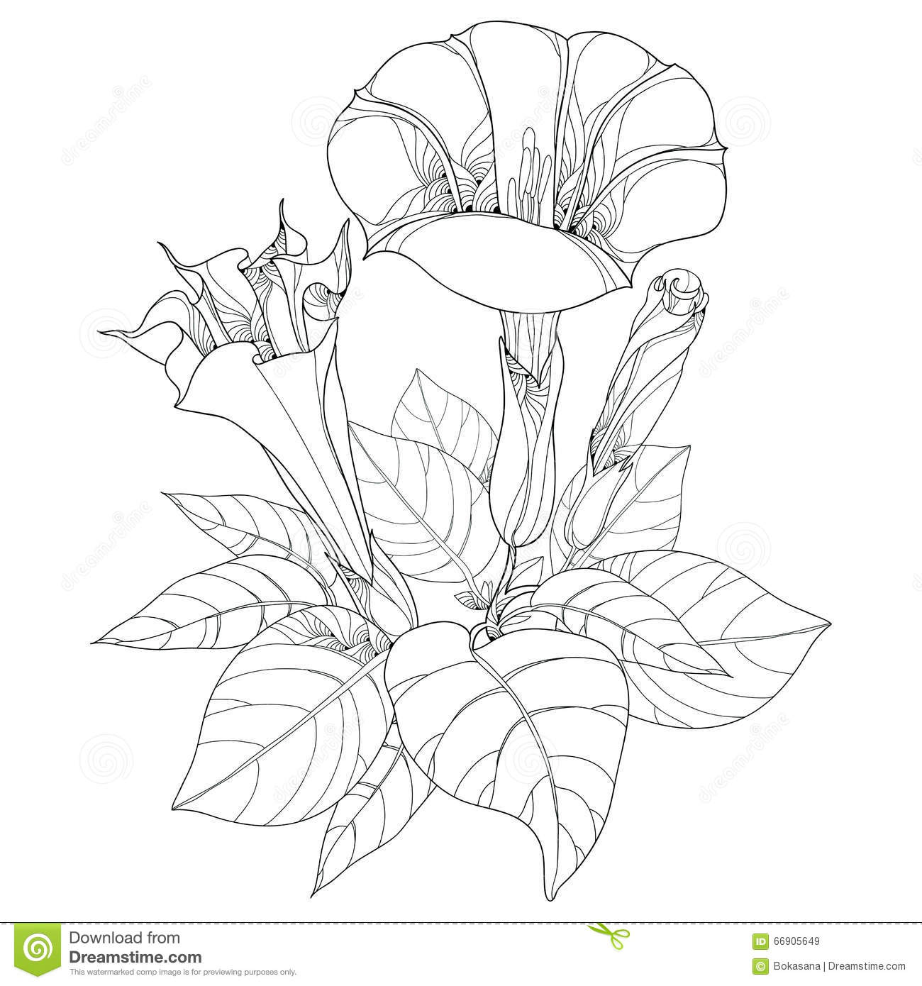 Stem With Datura Stramonium Or Thorn Apple Poisonous
