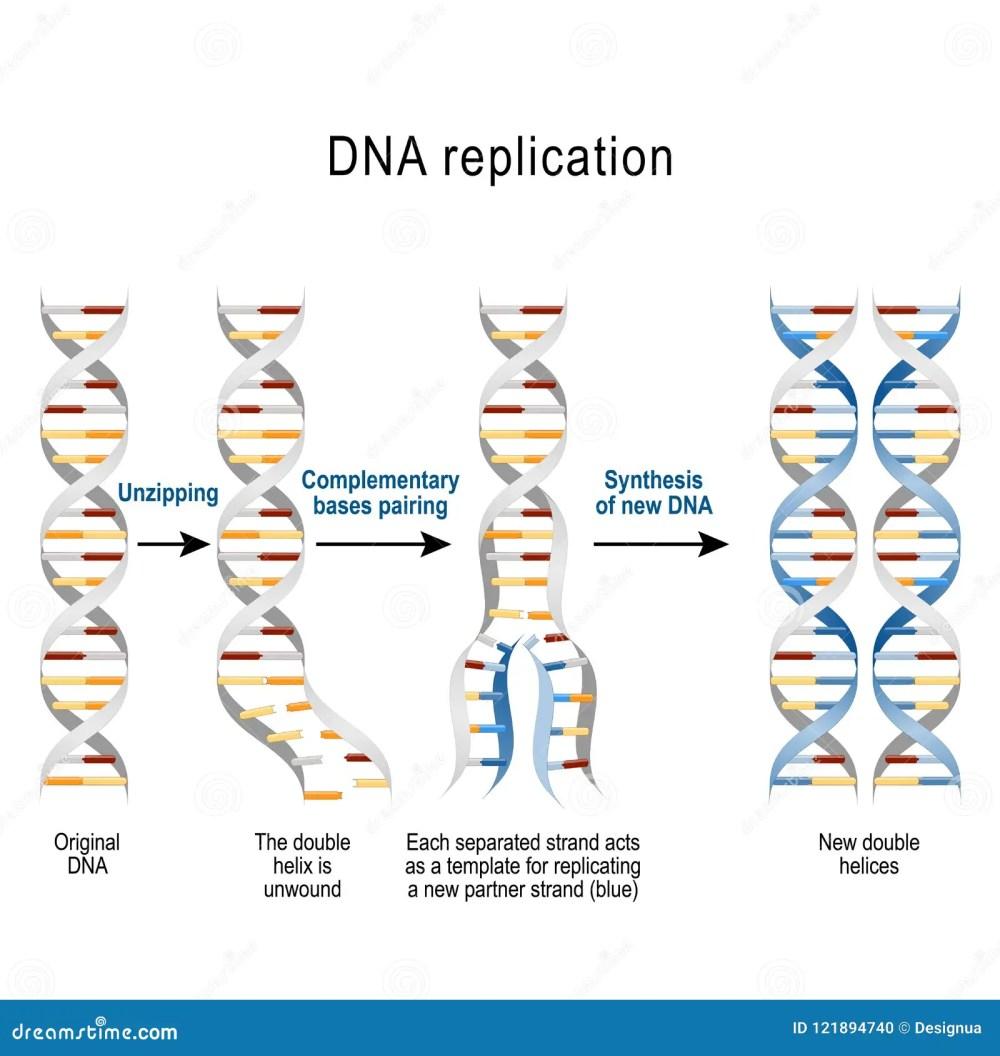 medium resolution of steps of dna replication