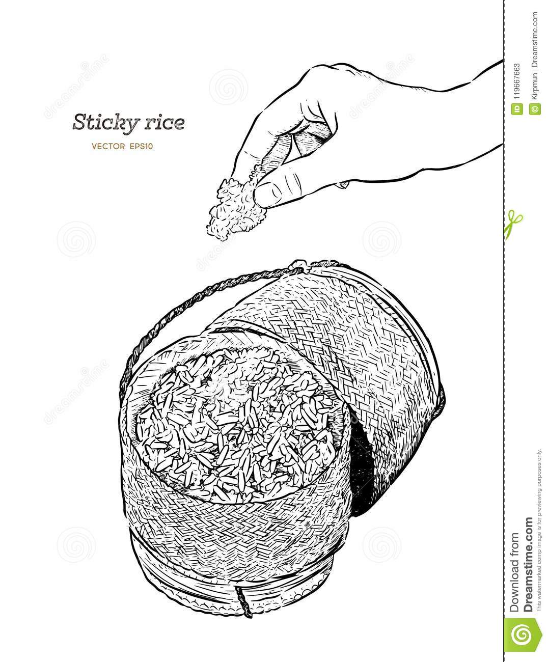 hight resolution of sticky rice in a bamboo wooden old style box hand draw sketch v