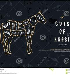 stock vector horse cuts diagram in the style of handmade graphic [ 1300 x 948 Pixel ]