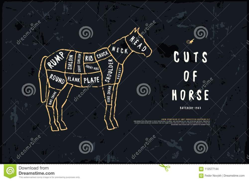medium resolution of stock vector horse cuts diagram in the style of handmade graphic