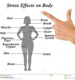stress effects on body stock image image of hand female 85687469 effects of stress on the body a diagram [ 1300 x 1218 Pixel ]