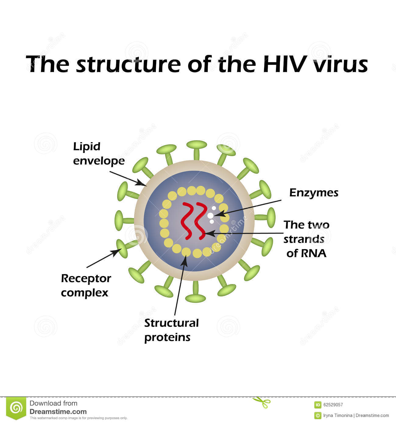 The Structure Of The Aids Virus Hiv Vector Illustration