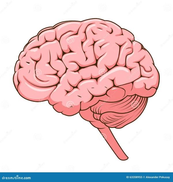 Structure Of Human Brain Schematic Vector Stock