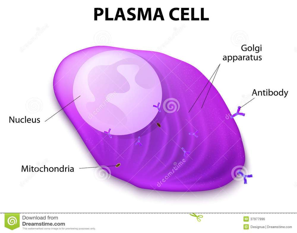 medium resolution of structure of the plasma cell stock vector illustration of plasm comic diagram of plasm