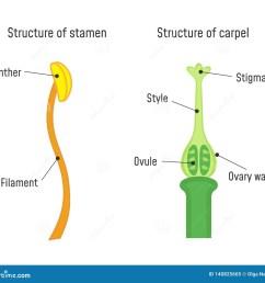 structure of stamen and carpel flower part diagram [ 1600 x 1422 Pixel ]